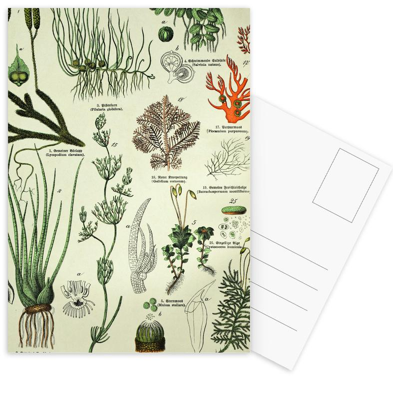 Auf Dem Grünen Zweig -Postkartenset