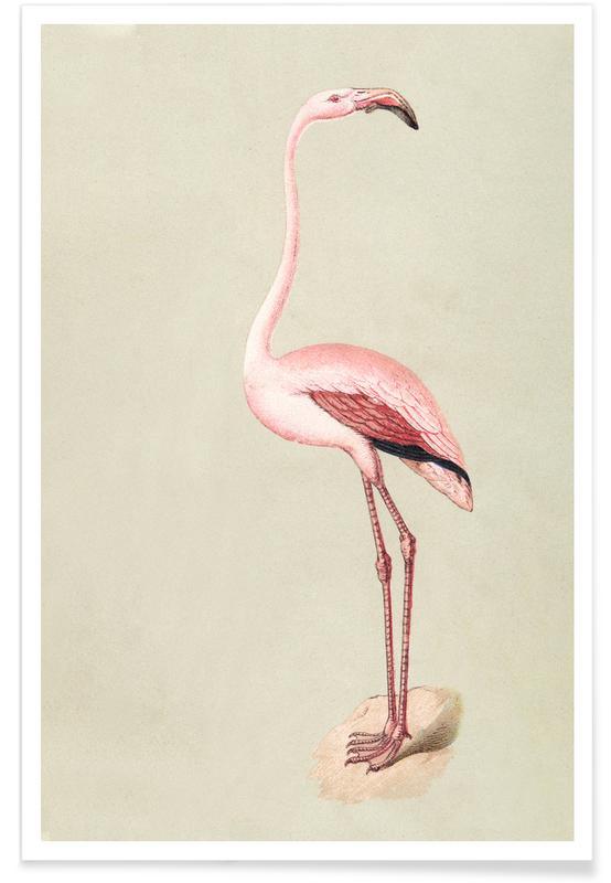 Flamencos, Pink Flamingo póster