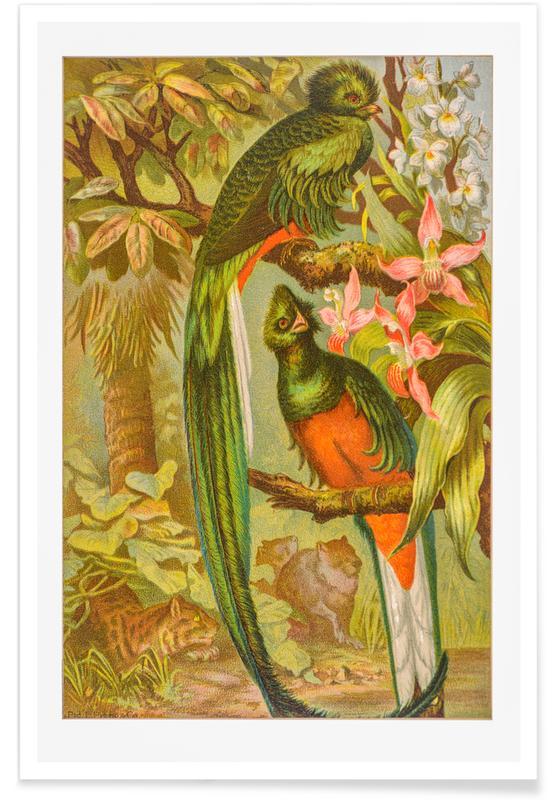 Native Birds Poster