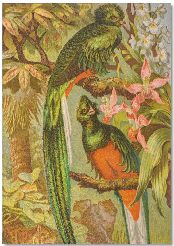 Native Birds -Notizblock
