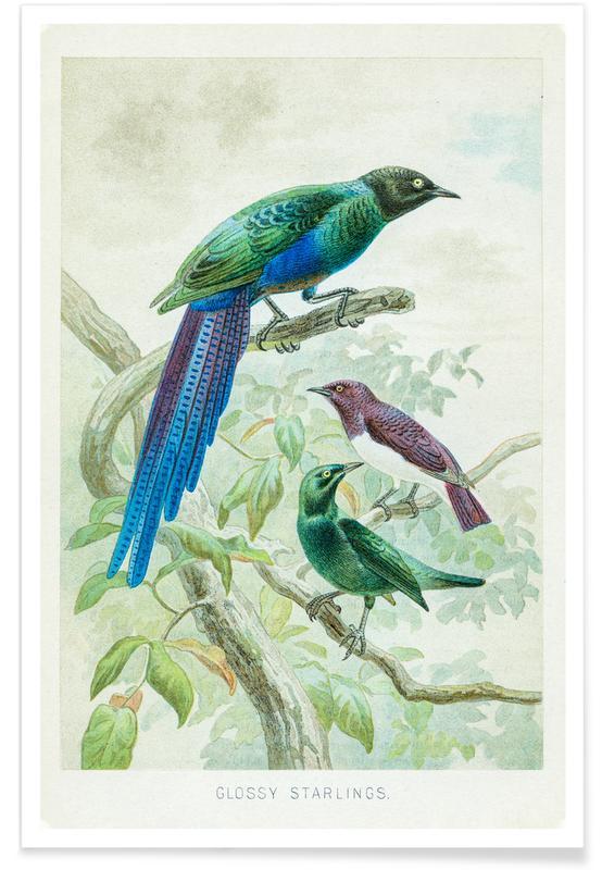 , Starlings Plakat