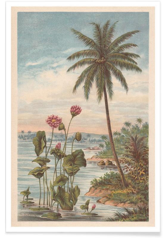 Solnedgange, Lotus Flowers Plakat