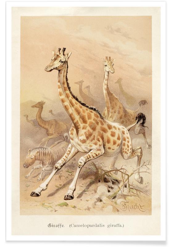 Girafes, Racing Giraffes affiche