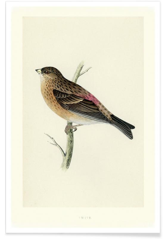 , Perching Bird póster