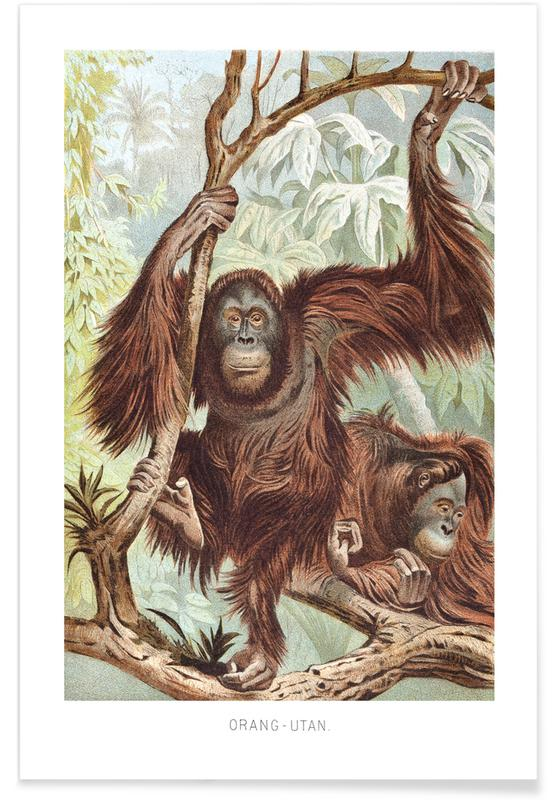 Monkeys, Orangutan pair Poster