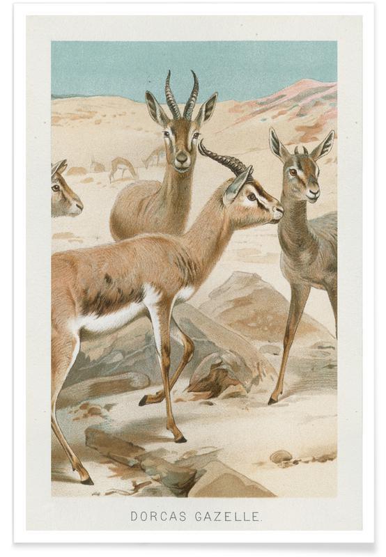 , Gazelles Plakat