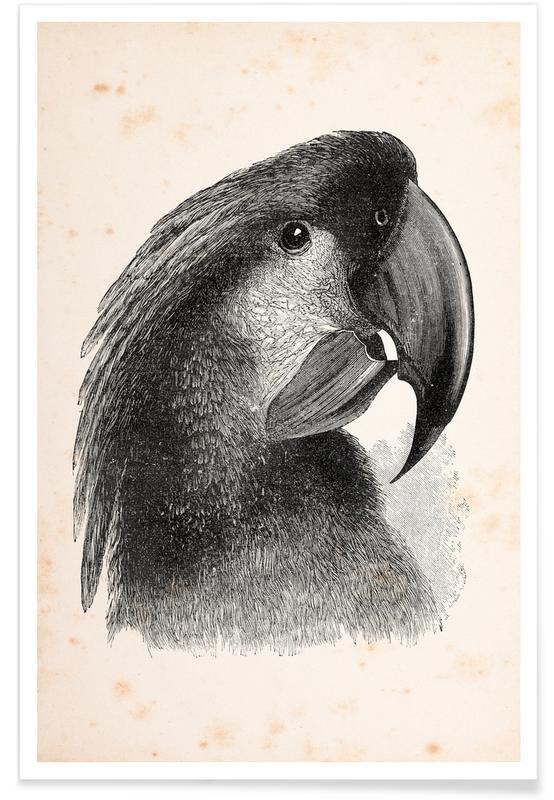 Loros, Cockatoo póster