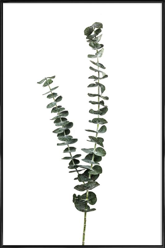 Silver Dollar Plant Poster i standardram