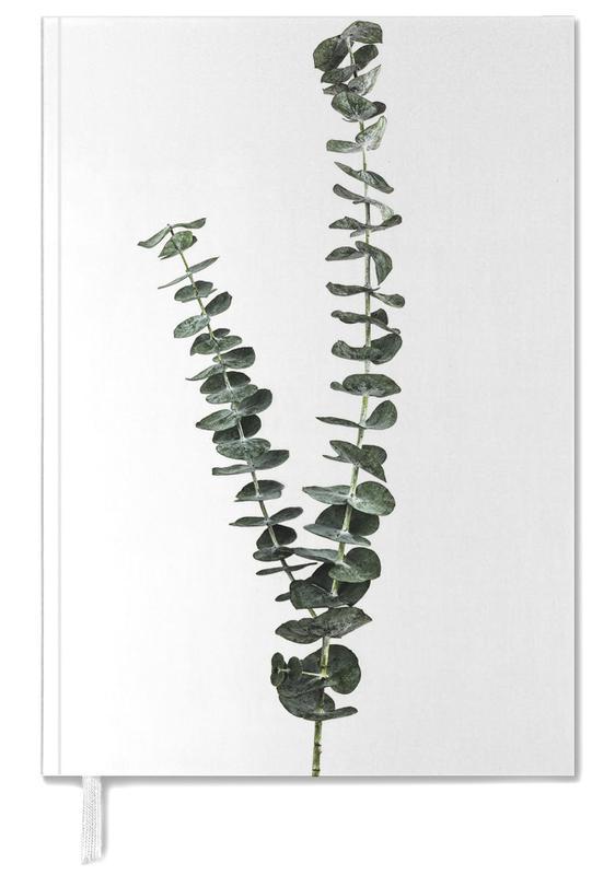 Silver Dollar Plant -Terminplaner