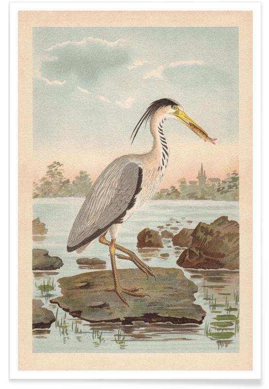, Fishing Heron póster