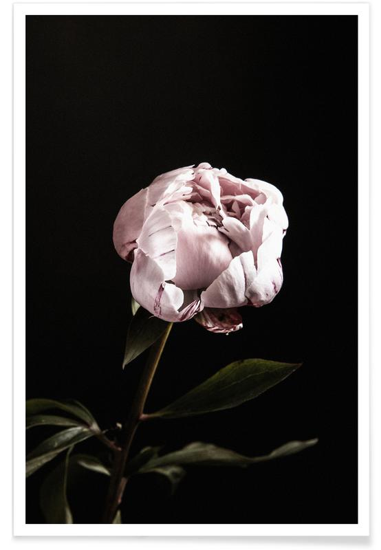 , Peony Pink and Black póster