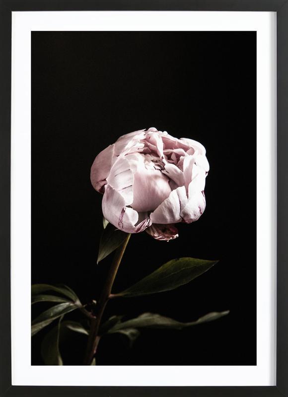 Peony Pink and Black Poster i träram