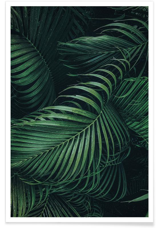 Feathered Palm -Poster