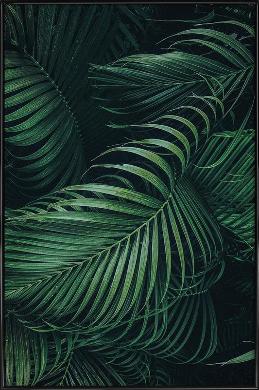 Feathered Palm Poster i standardram