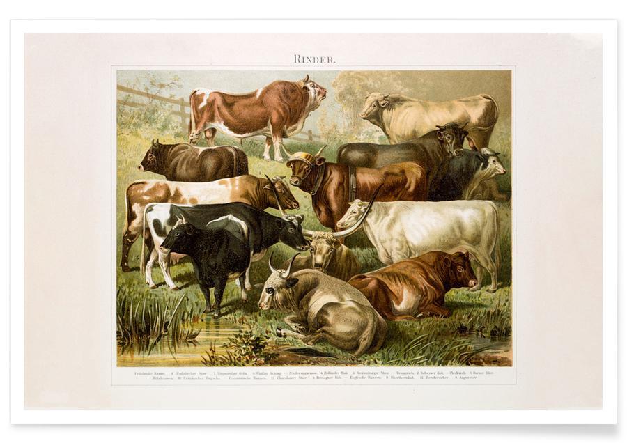 Cows, Herd Poster