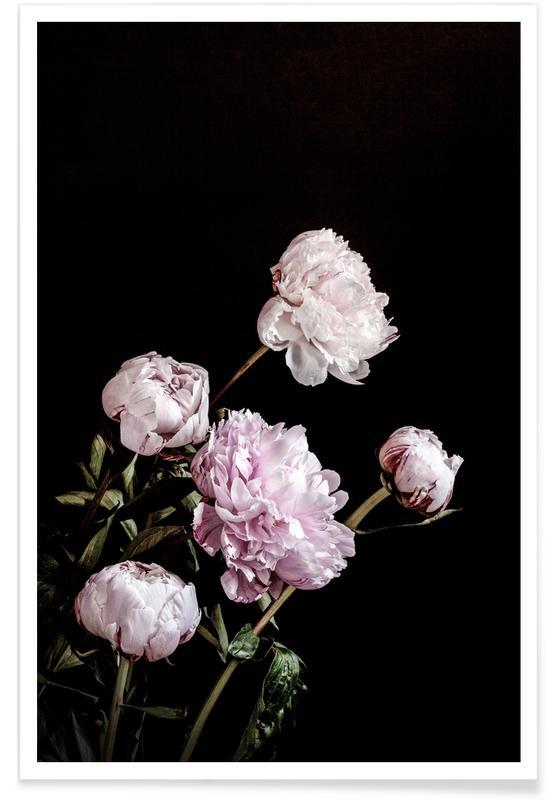 , Peonies Pink and Black Plakat