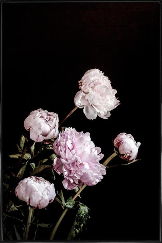 Peonies Pink and Black Poster i standardram