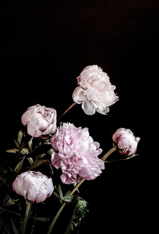Peonies Pink and Black -Acrylglasbild