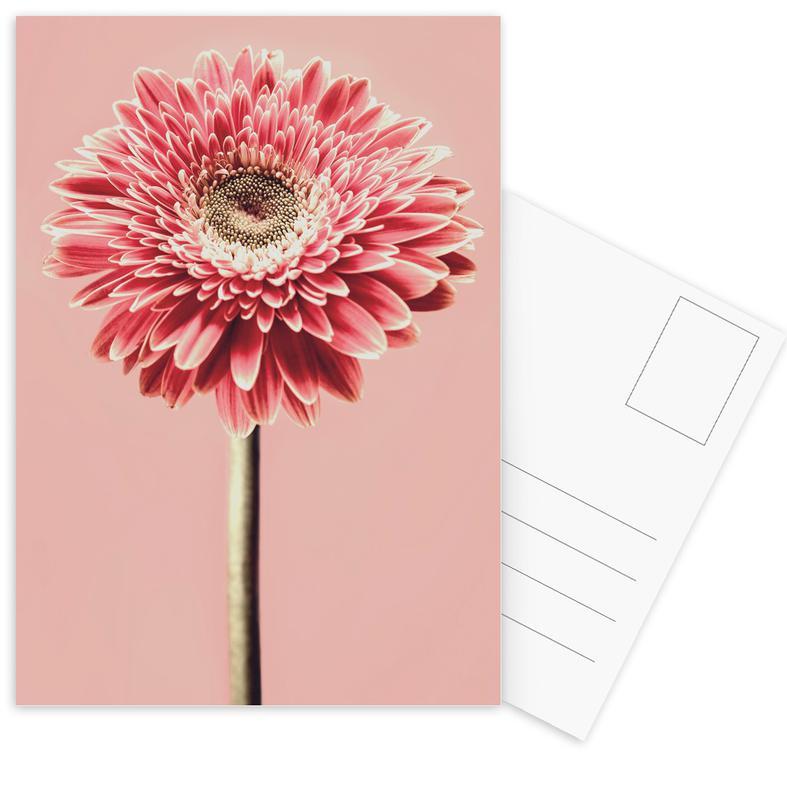 Red Barberton Daisy -Postkartenset