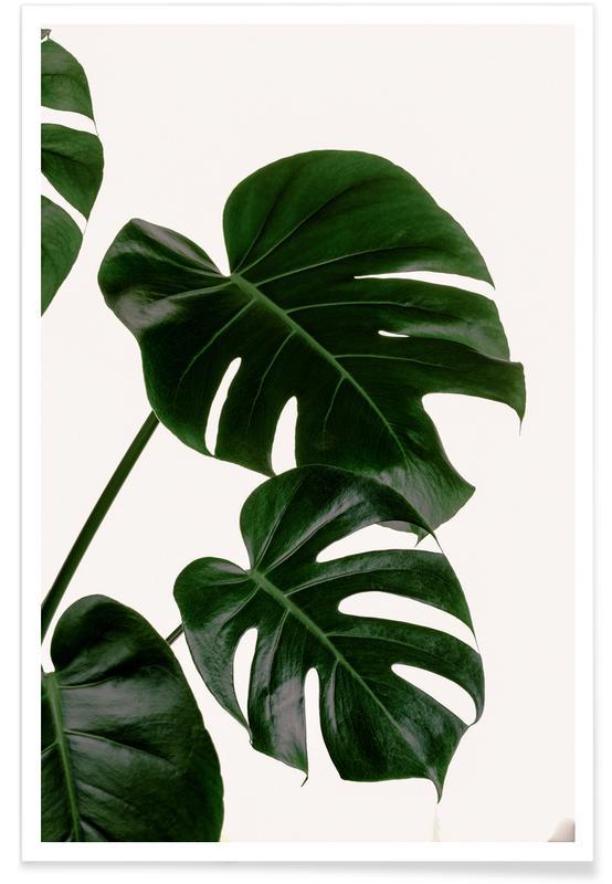 Bladen & växter, Green Giant Poster