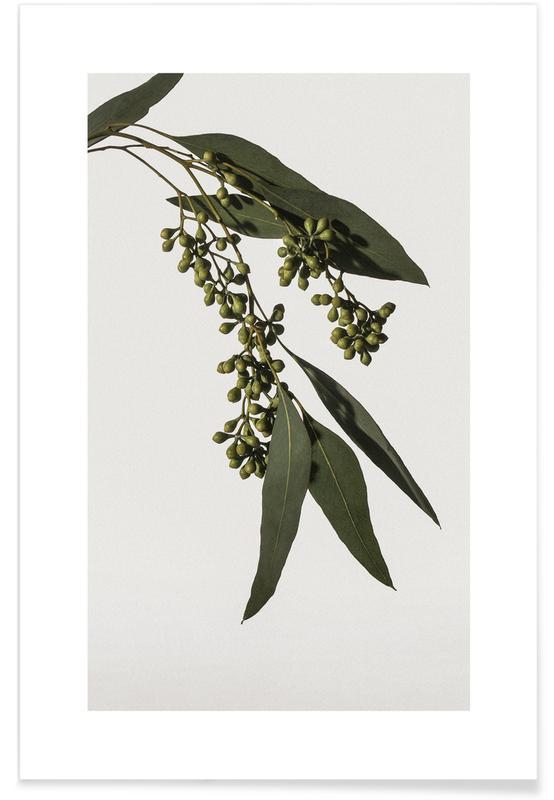 Blade & planter, Eucalyptus Plakat