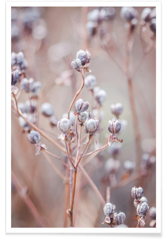 , Cotton Buds Poster
