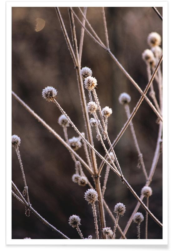 , Frosted Stems affiche