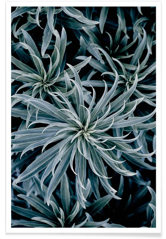 , Star Lily poster