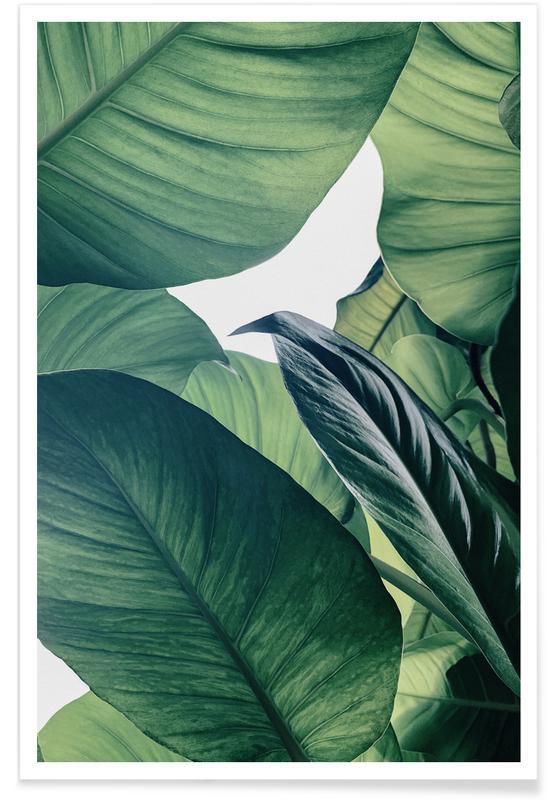 Blätter & Pflanzen, Light Shines Through -Poster