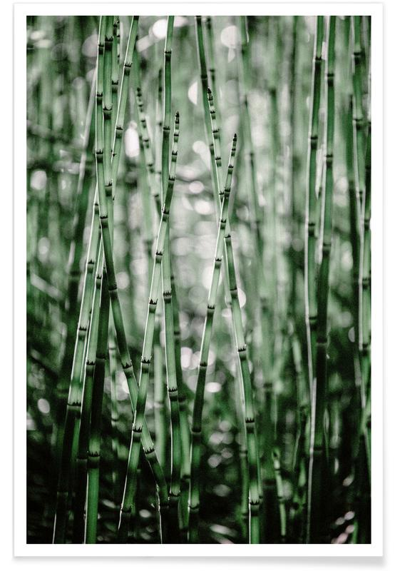 , Green Bamboo Poster