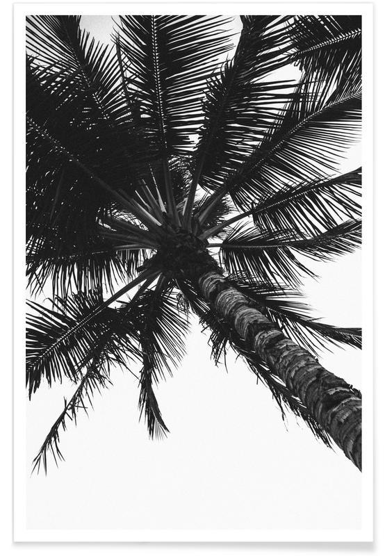 Propeller Palm Plakat