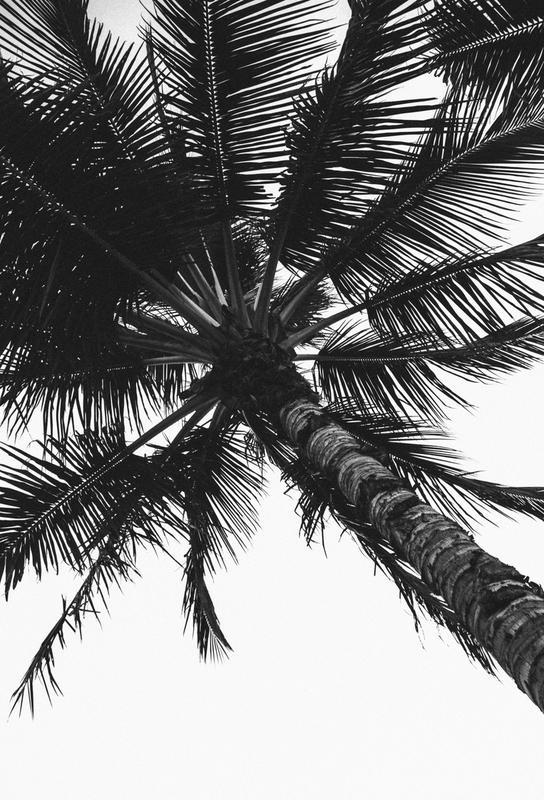 Propeller Palm -Acrylglasbild