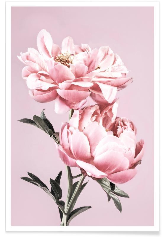 , Pink Peonies póster