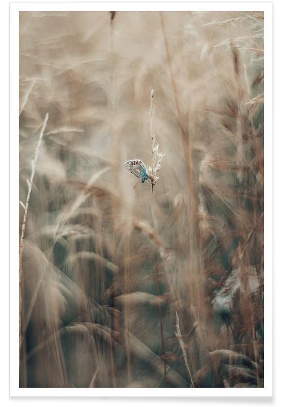 Vlinders, Delicate Wings poster