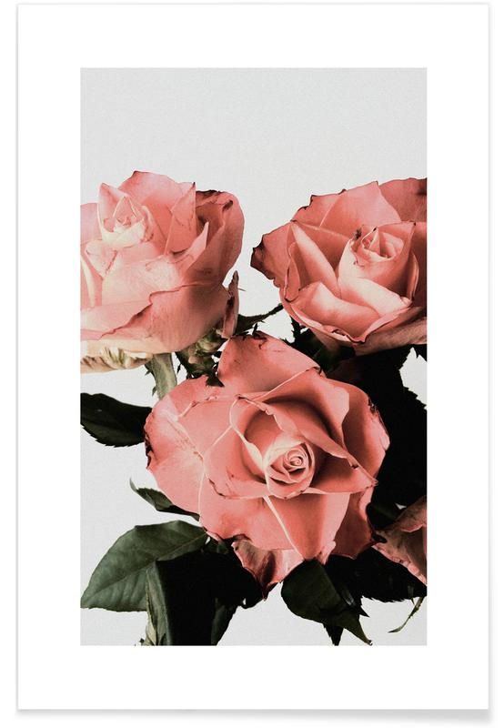 Roses affiche