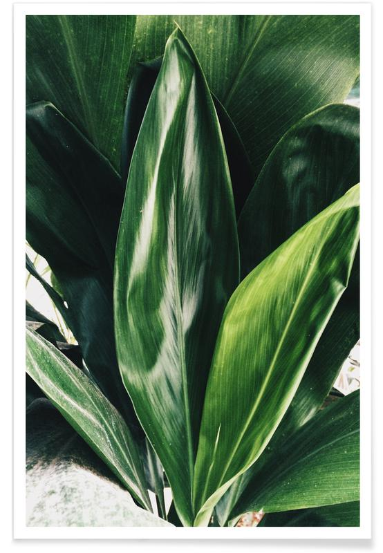 Leaves & Plants, Glorious Greens Poster
