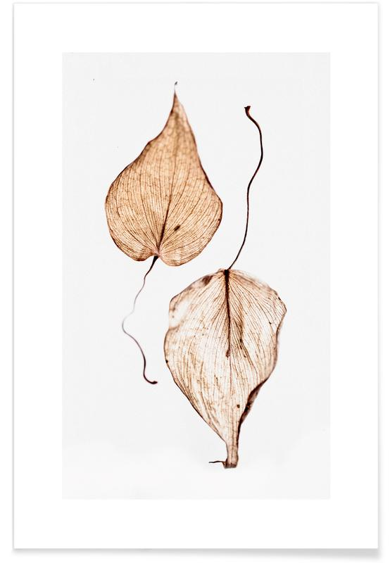 Delicate Leaves poster