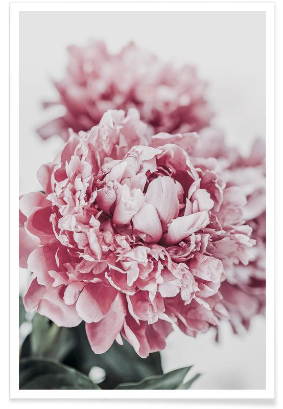 , Peony in Focus poster