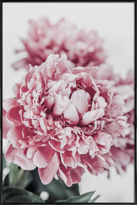 Peony in Focus Poster i standardram