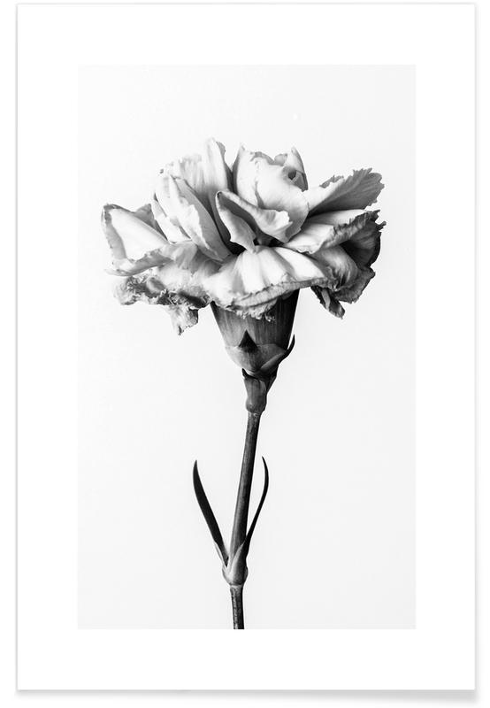 , Carnation poster