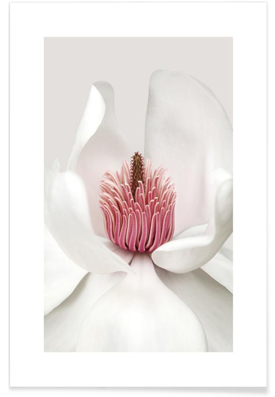 , White Magnolia Plakat
