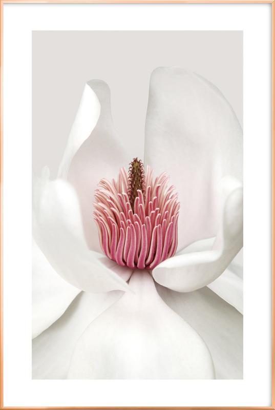 White Magnolia Poster in Aluminium Frame