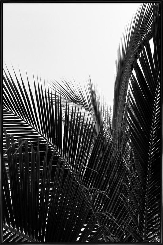 Monochrome Palm Poster i standardram