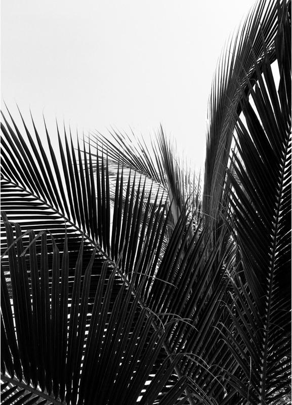 Monochrome Palm -Leinwandbild