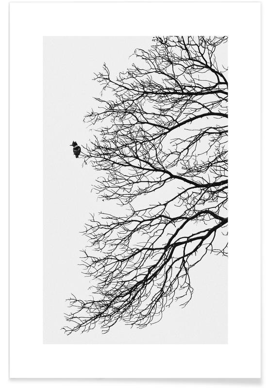 Árboles, Blanco y negro, Winter Bird póster