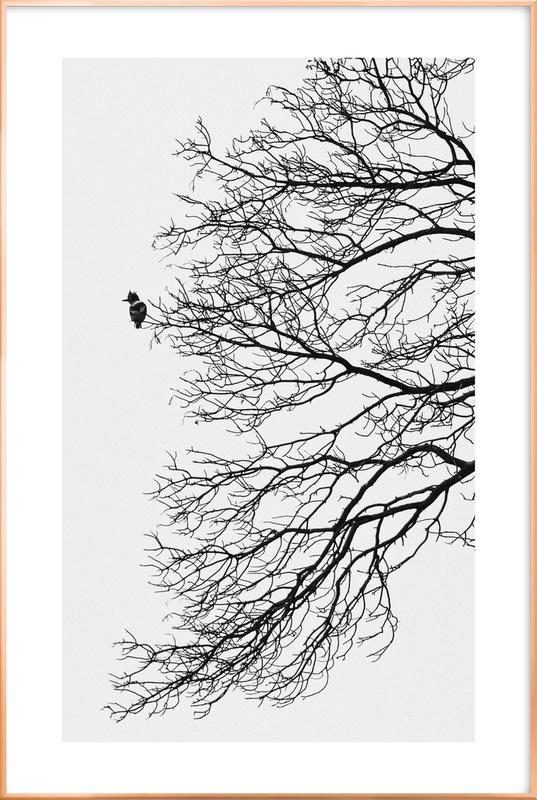 Winter Bird Poster i aluminiumram