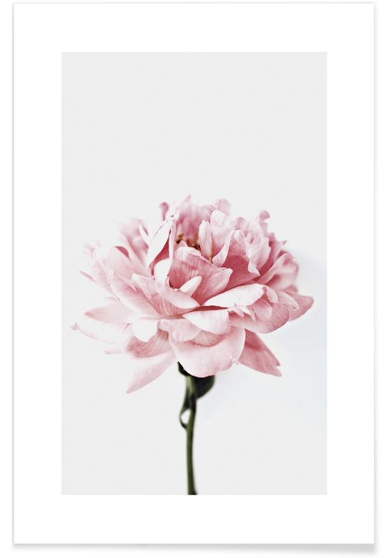Peony Pink and Grey Poster