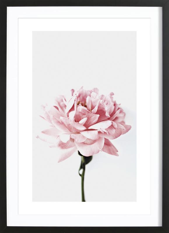 Peony Pink and Grey Poster i träram