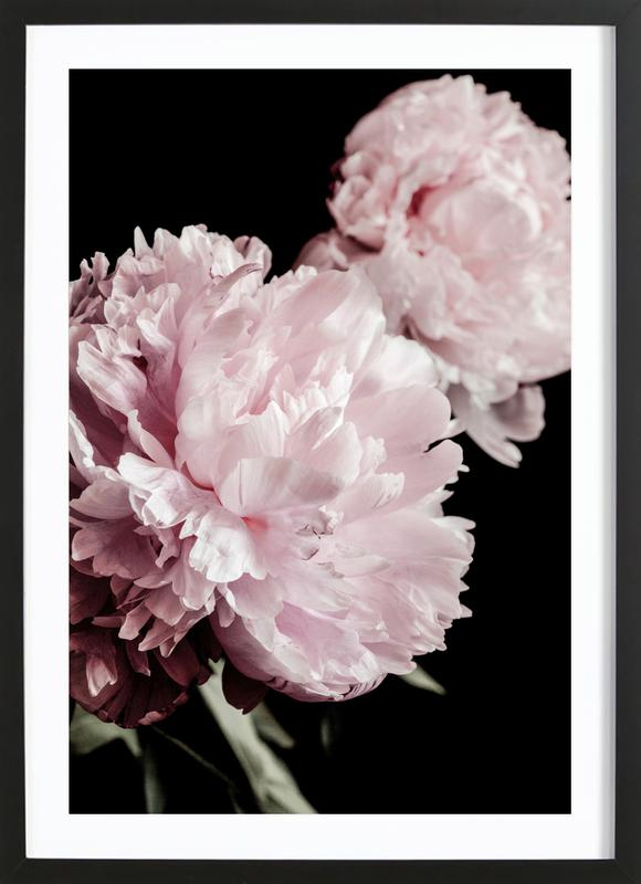 Two Peonies Poster i träram