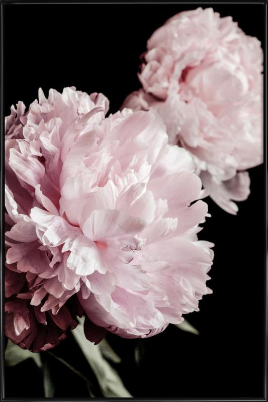 Two Peonies Framed Poster